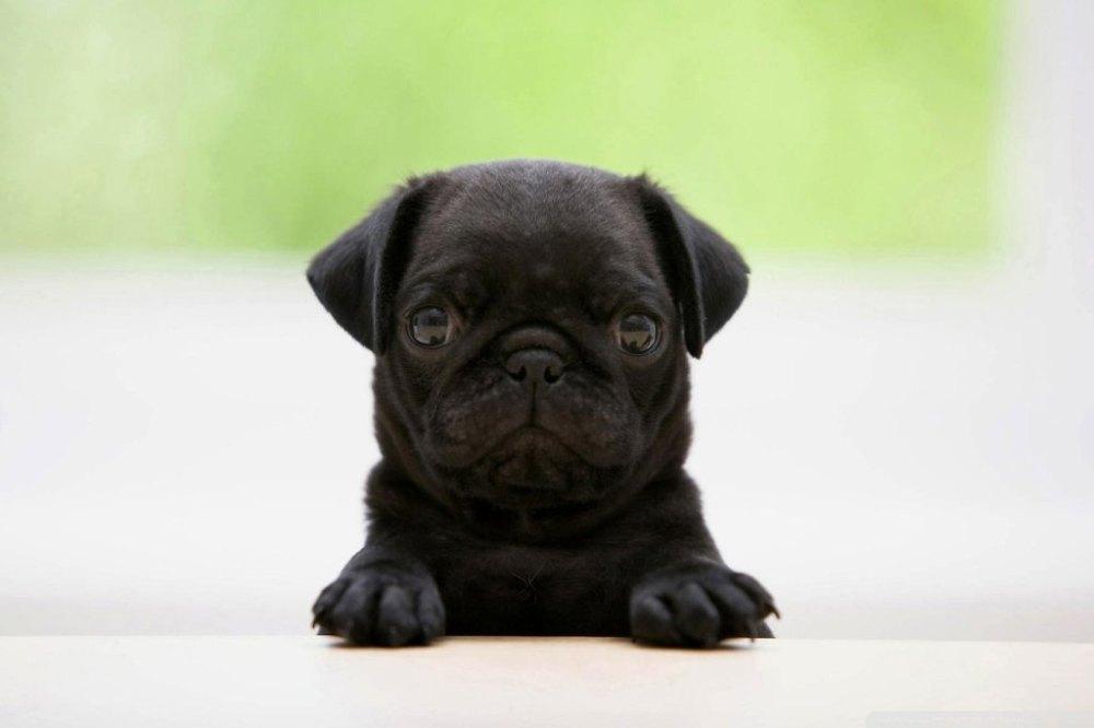 uber-puppy-12.jpg